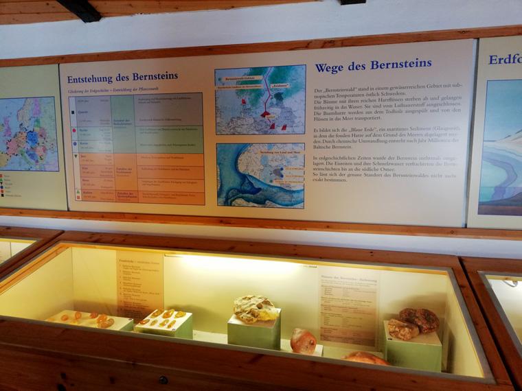 Entstehung des Bernsteins aus dem Bernsteinmuseum in Sellin