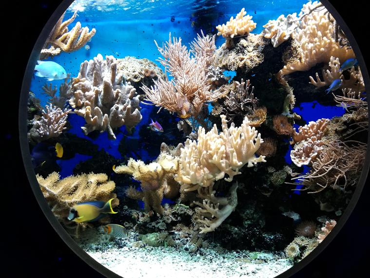 Die Unterwasserwelt in Potsdam in der Biosphäre