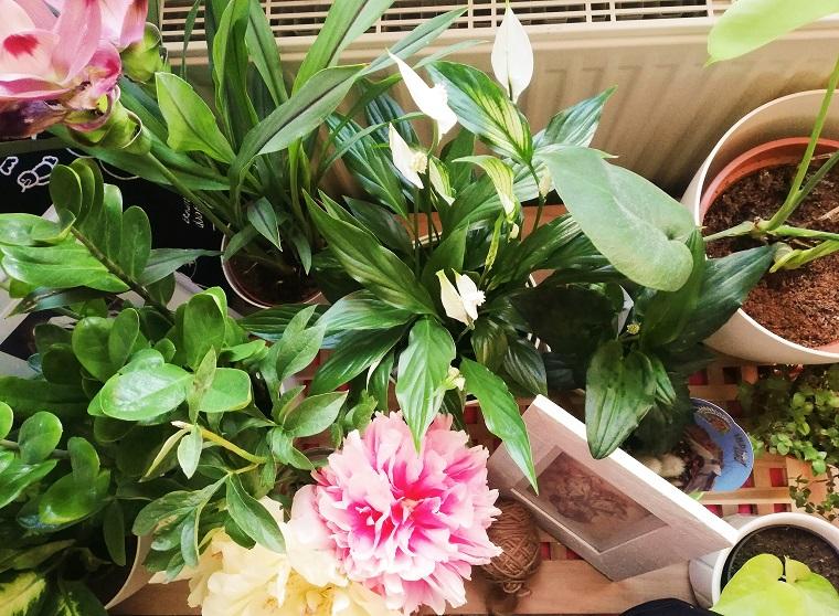 Grünes in die Wohnung holen mit Zimmerpflanzen (mit Freebie)