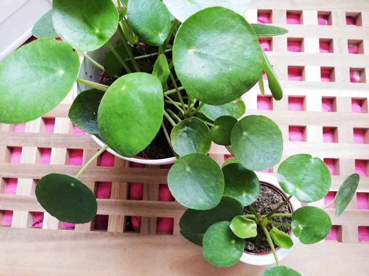 Meine pflegeleichten Zimmerpflanzen und ihre Pflege