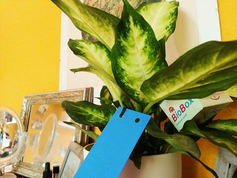 Nützlinge bestellen gegen Schädlinge in Pflanzen und Blautafeln