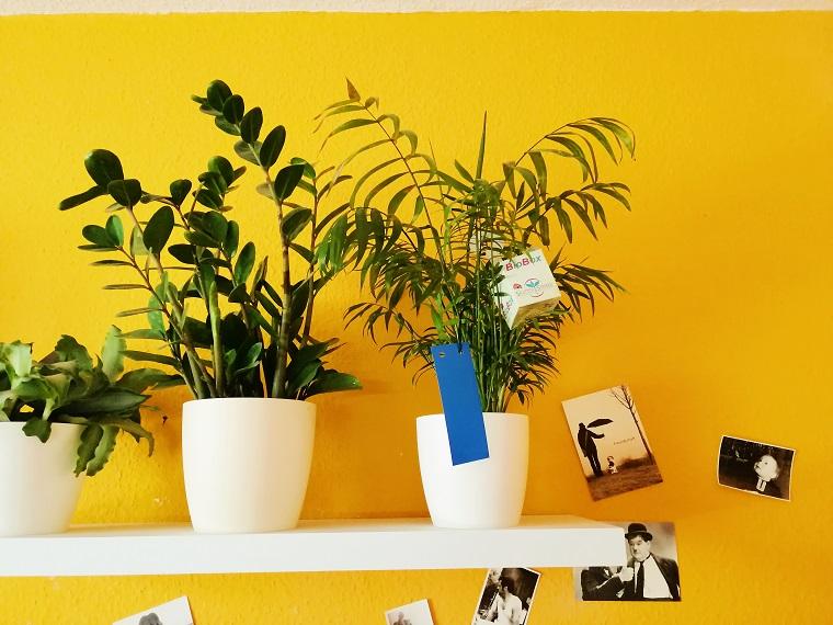Schädlinge an Zimmerpflanzen bekämpfen | Spinnmilben, Thripse und Co. [1]