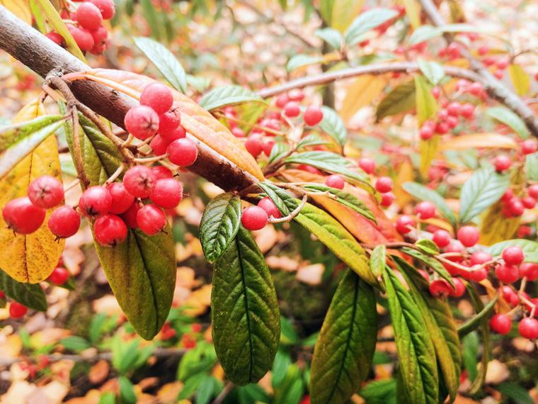Herbstdeko selber machen, trocknen und vorbereiten