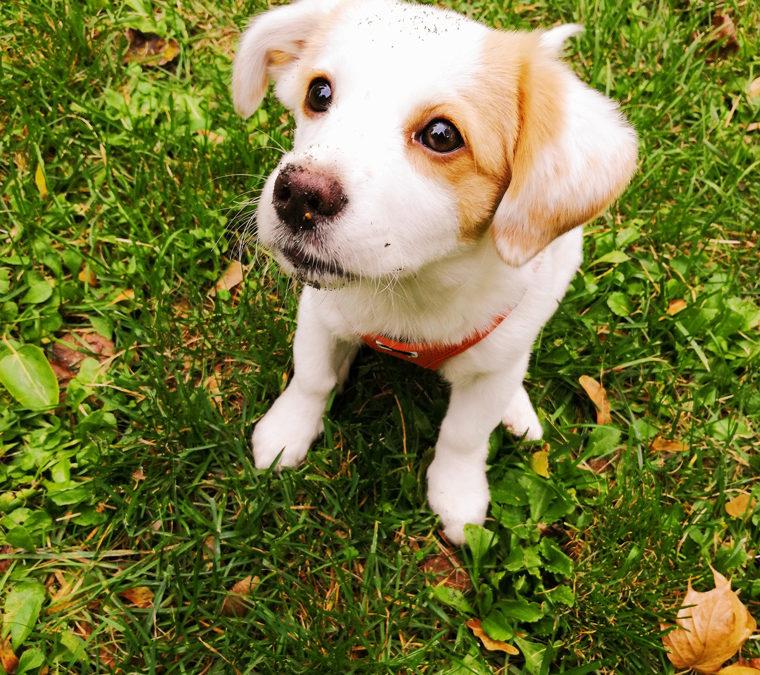 Unser Tierschutz-Hund Lina | Ihre Geschichte – Anfang