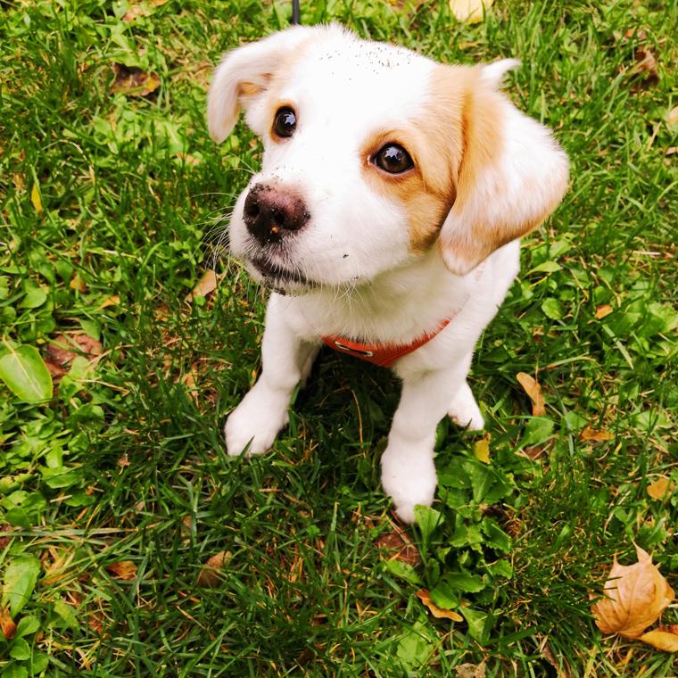Tierschutz-Hund Lina Hands4Animals