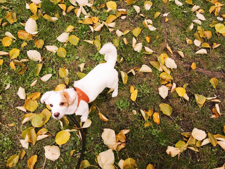 Tierschutz-Hund Lina November 2019