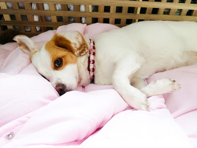 Tierschutzhund persönlicher Wert finden